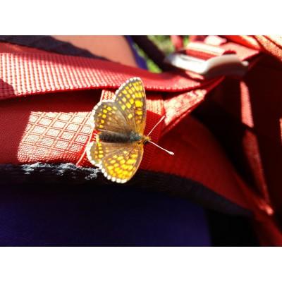 Bild 1 von Felicitas zu Osprey - Kestrel 28 - Tourenrucksack
